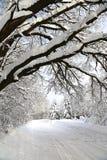 Paesaggio di inverno dopo le precipitazioni nevose nel giorno soleggiato Fotografia Stock