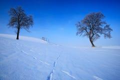 Paesaggio di inverno Due alberi soli nel paesaggio nevoso di inverno con cielo blu Alberi isolati sul prato della neve Scena di i Immagine Stock
