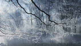 Paesaggio di inverno e neve di caduta illustrazione di stock