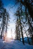 Paesaggio di inverno Equipaggi camminando nell'il legno nevoso in alpi italiane Fotografie Stock Libere da Diritti