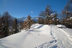 Paesaggio di inverno esplorato visitando dello sci Fotografia Stock