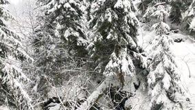 Paesaggio di inverno di favola della valle del fiume in montagne di Jeseniky, repubblica Ceca, video di Bila Opava del metraggio  video d archivio