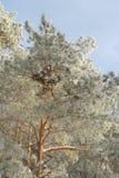 Paesaggio di inverno in foresta Fotografia Stock
