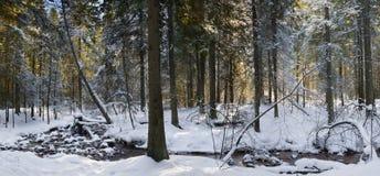 Paesaggio di inverno Foresta innevata Immagine Stock