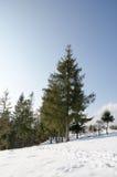 Paesaggio di inverno, formato riparato attillato verde, albero di Natale Fotografia Stock
