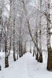Paesaggio di inverno Gli alberi sono coperti di gelo immagine stock libera da diritti