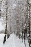 Paesaggio di inverno Gli alberi sono coperti di gelo immagini stock libere da diritti