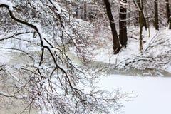 Paesaggio di inverno I rami degli alberi forestali dell'inverno ed il fiume congelato hanno coperto la neve Fotografia Stock