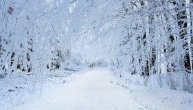 Paesaggio di inverno in montagne carpatiche vicino a Pezinok, Slovacchia Fotografie Stock