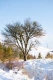 Paesaggio di inverno, montagne innevate, alberi su un fondo o Immagini Stock Libere da Diritti
