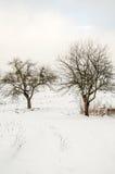 Paesaggio di inverno, montagne innevate, alberi su un fondo o Fotografie Stock Libere da Diritti