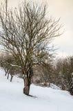Paesaggio di inverno, montagne innevate, alberi su un fondo o Immagine Stock Libera da Diritti