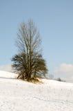 Paesaggio di inverno, montagne innevate, alberi su un fondo o Immagine Stock