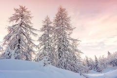 Paesaggio di inverno in montagne Julian Alps, Slovenia Fotografia Stock