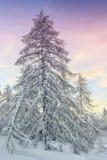 Paesaggio di inverno in montagne Julian Alps, Slovenia Immagini Stock Libere da Diritti