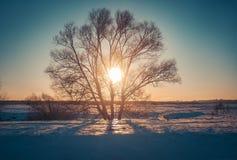 Paesaggio di inverno in natura della neve Fotografia Stock Libera da Diritti