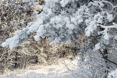 Paesaggio di inverno Natura di Snowy Tempo innevato di Natale della foresta fotografia stock libera da diritti