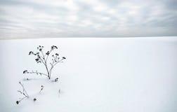 Paesaggio di inverno nel giorno smussato con una sbavatura asciutta su priorità alta Fotografia Stock Libera da Diritti