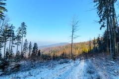 Paesaggio di inverno nel Tatras di mattina Fotografia Stock