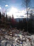 Paesaggio di inverno nella foresta Fotografia Stock