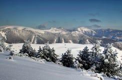 Paesaggio di inverno nella gamma di Velka Fatra con i pini Slovacchia immagine stock