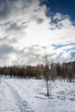 Paesaggio di inverno nella lampadina Immagini Stock