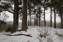 Paesaggio di inverno in Nybro Svezia Fotografie Stock
