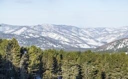 Paesaggio di inverno Panorama delle montagne di Altai cedro Immagini Stock