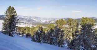 Paesaggio di inverno Panorama delle montagne di Altai cedro Fotografia Stock