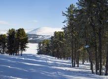 Paesaggio di inverno Panorama delle montagne di Altai Foresta del cedro Immagini Stock Libere da Diritti