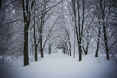 Paesaggio di inverno Parco, alberi forestali nella neve fotografia stock libera da diritti