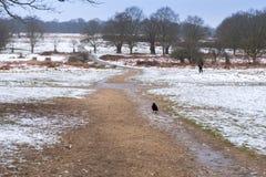 Paesaggio di inverno in Richmond Park Corvo solo sul percorso immagini stock