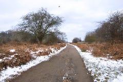 Paesaggio di inverno in Richmond Park Foglie di autunno recenti e terra innevata immagine stock