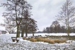Paesaggio di inverno in Richmond Park, a Londra immagine stock