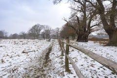 Paesaggio di inverno in Richmond Park Recinto di legno e grandi alberi maestosi fotografie stock