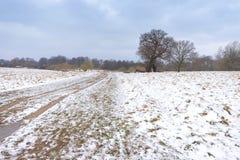 Paesaggio di inverno in Richmond Park Sosta vuota immagini stock libere da diritti