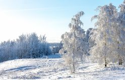 Paesaggio di inverno, siluetta di singolo albero su un fondo nevoso fotografia stock libera da diritti