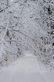 Paesaggio di inverno di Snowy della foresta gelida bianca Fotografia Stock Libera da Diritti