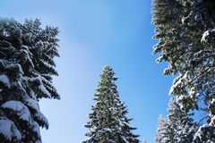 Paesaggio di inverno - sopra la vista Fotografia Stock