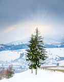 Paesaggio di inverno, strada innevata nelle montagne con gli alberi Immagine Stock Libera da Diritti