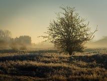 Paesaggio di inverno su una mattina nebbiosa Immagine Stock
