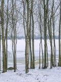 Paesaggio di inverno: un fiume coperto di ghiaccio, tronchi di albero fotografia stock libera da diritti