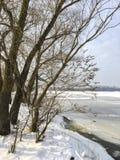 Paesaggio di inverno: un fiume coperto di ghiaccio, tronchi di albero fotografie stock libere da diritti