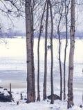 Paesaggio di inverno: un fiume coperto di ghiaccio, tronchi di albero, passeggiata di due persone sul ghiaccio fotografia stock libera da diritti