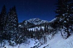 Paesaggio di inverno in una notte stellata Fotografie Stock Libere da Diritti