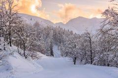 Paesaggio di inverno vicino al centro dello sci di Vogel Fotografie Stock