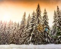 Paesaggio di inverno vicino al centro dello sci di Vogel Fotografia Stock Libera da Diritti