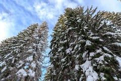 Paesaggio di inverno vicino al centro dello sci di Vogel Fotografie Stock Libere da Diritti