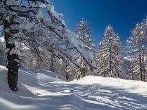 Paesaggio di inverno vicino al centro dello sci di Vogel in montagne Julian Alps Immagini Stock