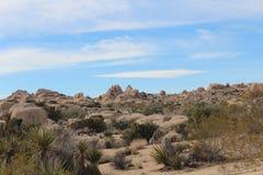 Paesaggio di Joshua Tree National Park Desert Fotografia Stock